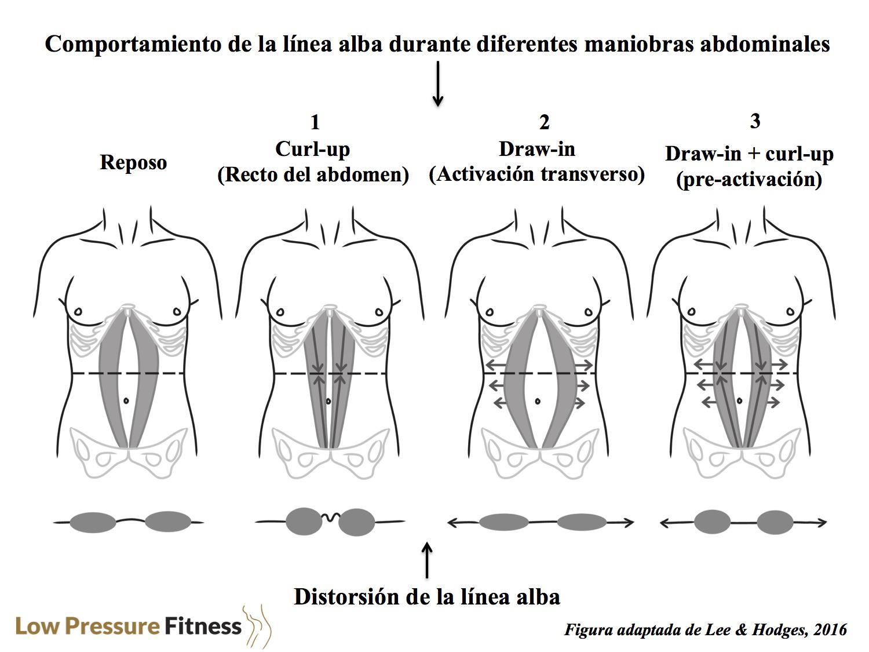 comportamiento-linea-alba-diferentes-abdominales